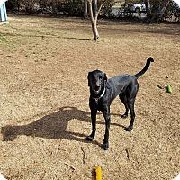 Adopt A Pet :: Frankie - Springfield, MO