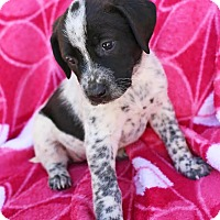 Adopt A Pet :: Lagertha - Harrisonburg, VA
