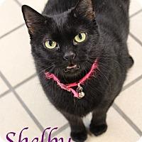Adopt A Pet :: Shelby - Bradenton, FL