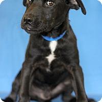 Adopt A Pet :: Hawaii - Waldorf, MD