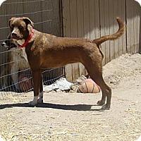 Adopt A Pet :: MARI - Pie Town, NM