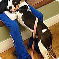 Adopt A Pet :: Pal - Nashua, NH