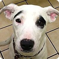 Adopt A Pet :: Lizzie - North Chittenden, VT