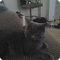 Adopt A Pet :: *Cheshire - Winder, GA
