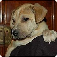 Adopt A Pet :: Huxley - Chula Vista, CA