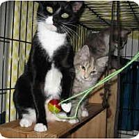 Adopt A Pet :: Terri - New York, NY