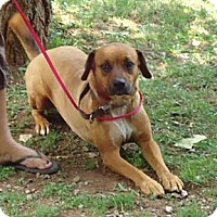 Adopt A Pet :: Luna 100$ reduction - Hagerstown, MD