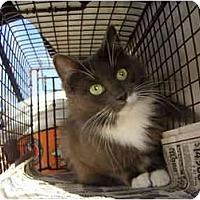Adopt A Pet :: Smokey - Los Angeles, CA