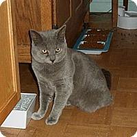 Adopt A Pet :: Sherman - Norwich, NY