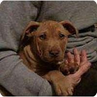 Adopt A Pet :: Sid - Killen, AL
