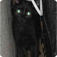 Adopt A Pet :: Chili - Davis, CA