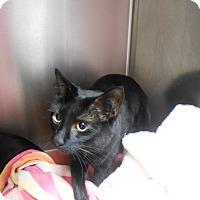 Adopt A Pet :: Phoebe - Maywood, NJ