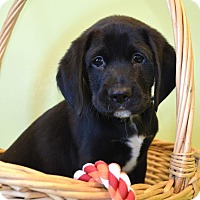 Adopt A Pet :: *Emmett  - PENDING - Westport, CT