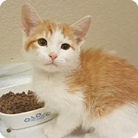 Adopt A Pet :: Chester - Loveland, CO