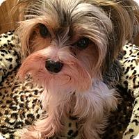 Adopt A Pet :: Remi - Leesburg, FL