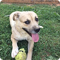 Adopt A Pet :: Maybelle - Russellville, KY