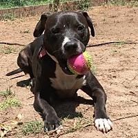 Adopt A Pet :: Pretty Boy Floyd - Sylacauga, AL