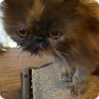 Adopt A Pet :: Tess - Columbus, OH