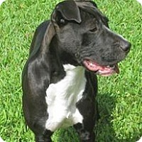 Adopt A Pet :: King - Pompano Beach, FL