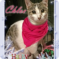 Adopt A Pet :: Chloe - East Brunswick, NJ