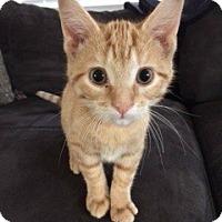 Adopt A Pet :: Orange - McHenry, IL