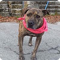 Adopt A Pet :: KoKo - Greensboro, NC
