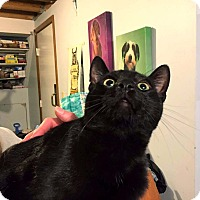 Adopt A Pet :: Waylon - Lombard, IL