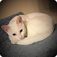 Adopt A Pet :: Angelica - Hammond, LA