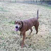 Adopt A Pet :: Sally - Kaufman, TX
