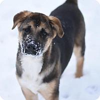 Adopt A Pet :: Su - Dodson, MT