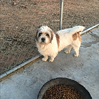 Adopt A Pet :: Baxter - Blanchard, OK