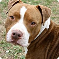 Adopt A Pet :: Duncan - Richland Hills, TX