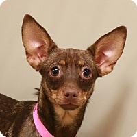 Adopt A Pet :: *SMILES - Las Vegas, NV