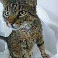 Adopt A Pet :: Bradley - Hamburg, NY