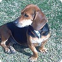 Adopt A Pet :: Daisy Mae - Phoenix, AZ