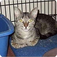 Adopt A Pet :: Sophie - Fort Lauderdale, FL