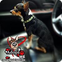 Adopt A Pet :: Frisco - Huntington Beach, CA