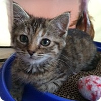 Adopt A Pet :: Baby Bells - Long Beach, NY