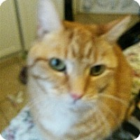 Adopt A Pet :: Peaches - East Meadow, NY