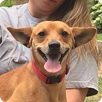 Adopt A Pet :: Jasper - Homewood, AL