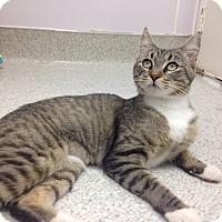 Adopt A Pet :: Xena - Newport Beach, CA