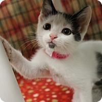 Adopt A Pet :: Dottie - Medina, OH