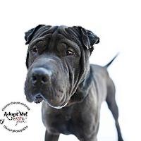 Adopt A Pet :: Kenny - pending - Mira Loma, CA