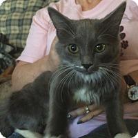 Adopt A Pet :: Faith - Whiting, IN