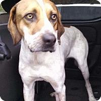 Adopt A Pet :: Yukon Cornelius - Jetersville, VA
