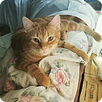 Adopt A Pet :: Gabriel - Taylorsville, IN