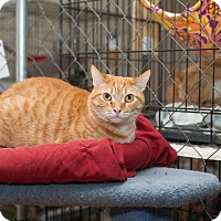Adopt A Pet :: Sebastian - Fallbrook, CA