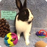 Adopt A Pet :: Wagner - lake elsinore, CA