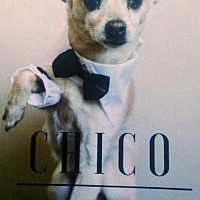 Adopt A Pet :: Chico - Ceres, VA