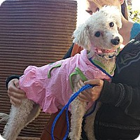 Adopt A Pet :: Vanna - Encinitas, CA